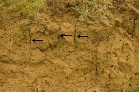 close-up of soil showing texture of soil and vertical cracks