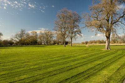 Large expanse of level lawn with a few trees.