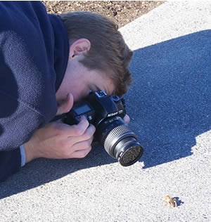 Photograper gets down on the ground to get a close-up of a Jerusalem cricket.