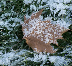 ice on fallen brown leaf