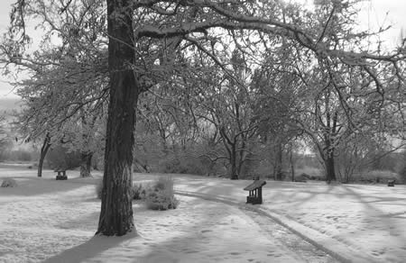 The dark trunks and branches of trees contrast with the grays and whites of the snow beneath in a black and white photo of the park grounds
