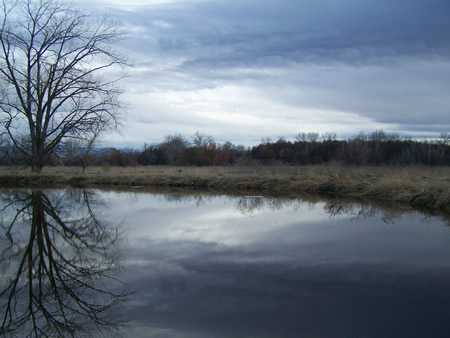 Incoming clouds give the sky a dark, foreboding look which is mirrored by its reflection in the pond