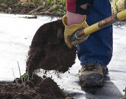 close-up of shoveling compost around new plant