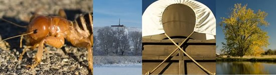 collage of four photos: an insect close-up, winter at the park, a covered wagon, and a tree reflected in a pond