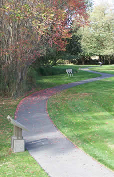 curving paved path passes by red leaf sumac