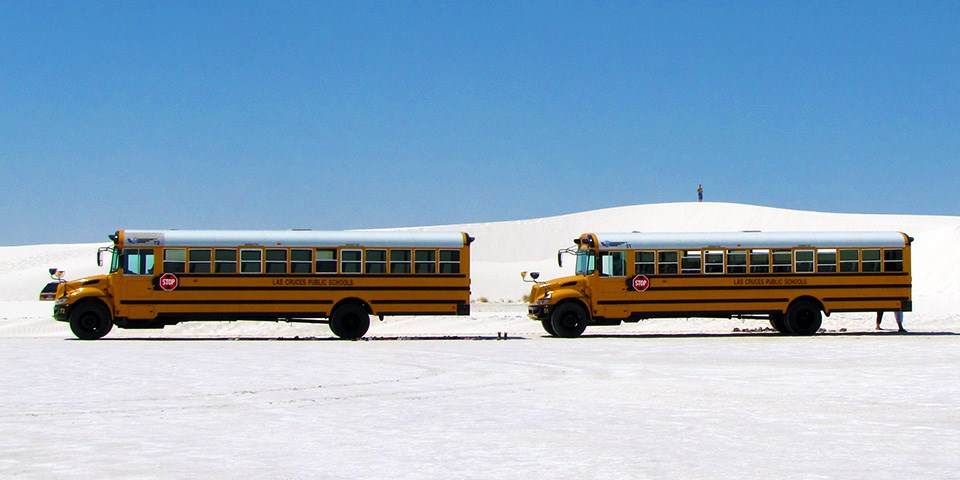 Two yellow school buses parked by the white gypsum dunes.