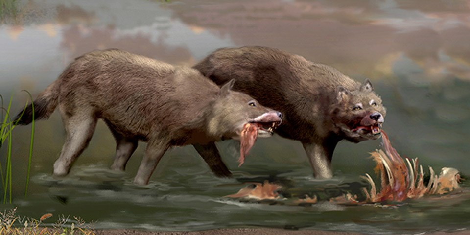 Image result for dire wolves eating
