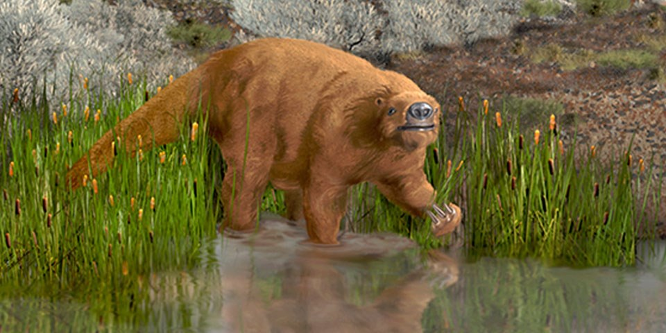 Ground Sloth in water