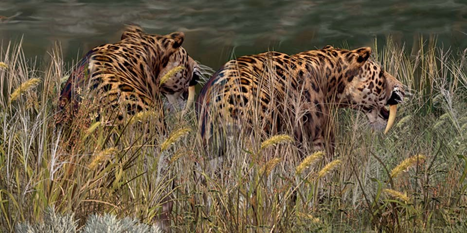 Saber-Toothed Cats in grass