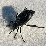 Beetle on white sand