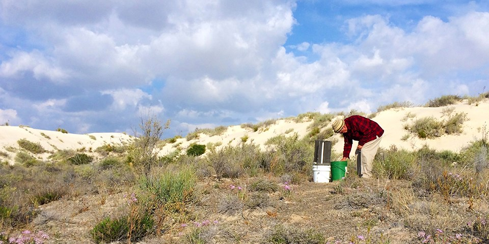 A man in red plaid bends over and examines a bucket amidst grassy scrub