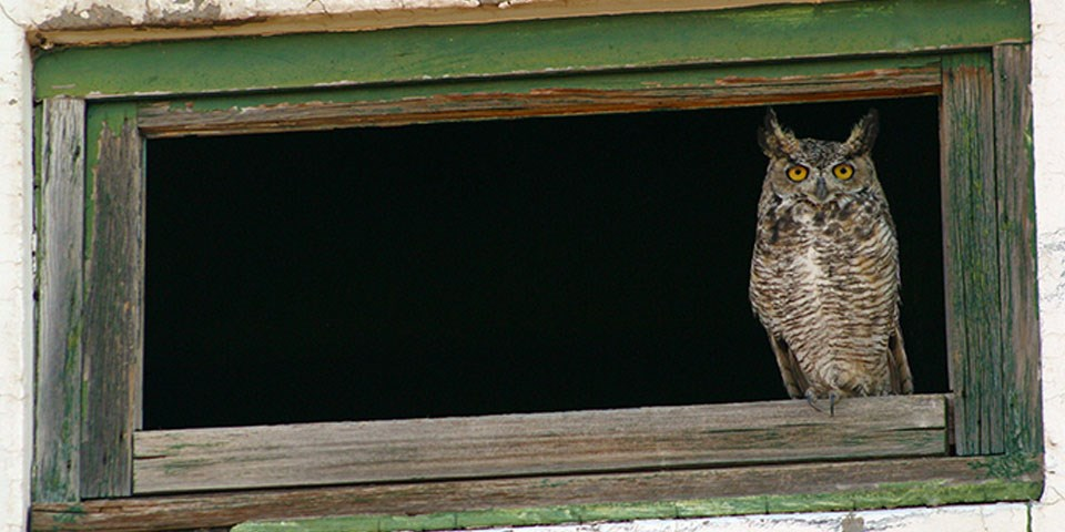 owl perching on an old window rail