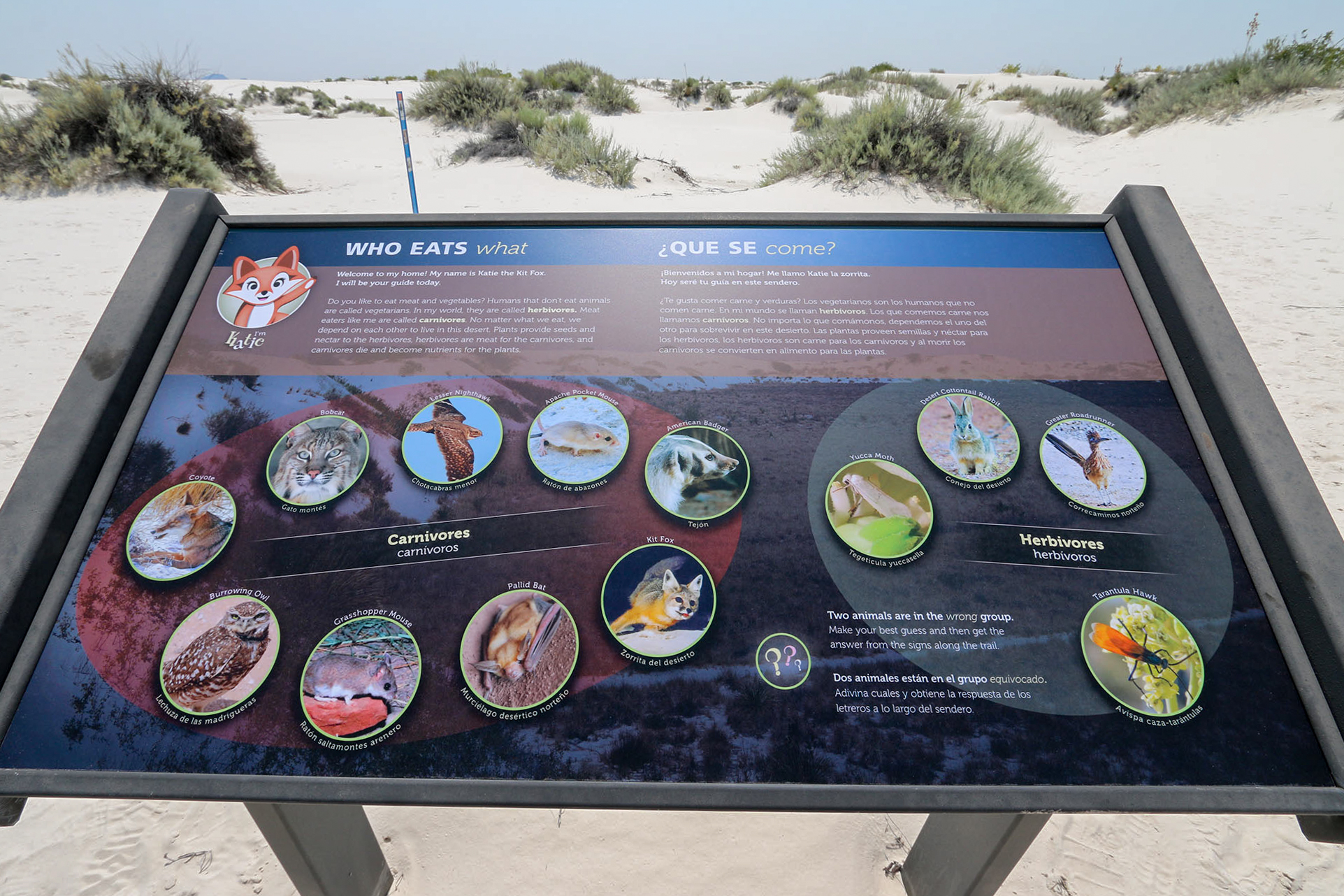 Katie the Kit Fox interpretive trail sign along the Dune Life Nature Trail.