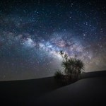 Milky Way above a Soaptree yucca tree.