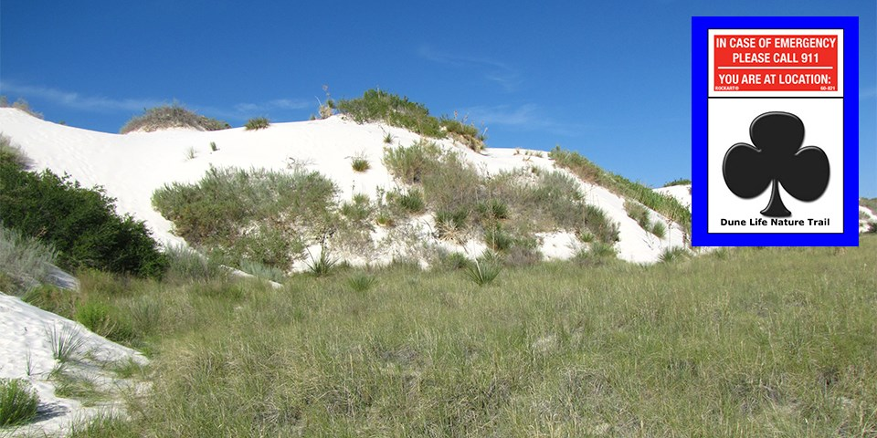 Dune with plants and a symbol of a club that corresponds to this trail.
