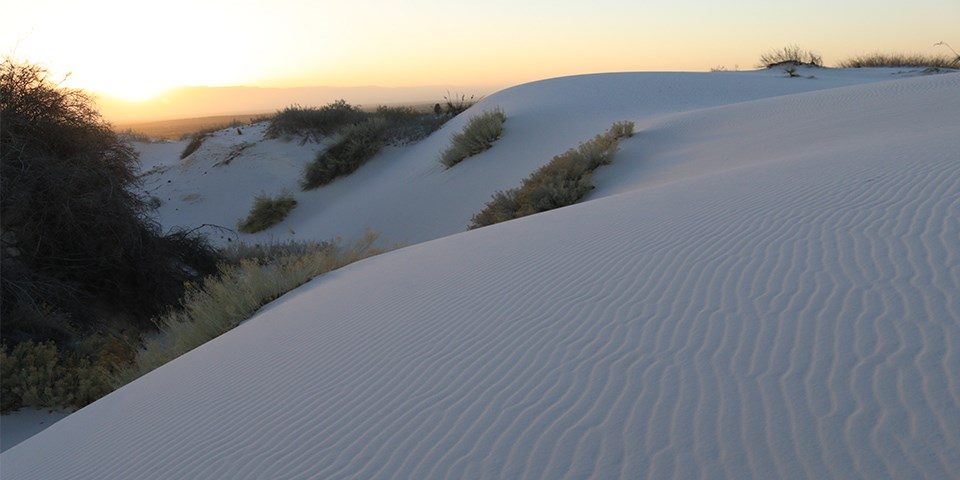 White sand dune with ripples and vegetation with sunrise in the background.