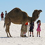 Visitors with a camel