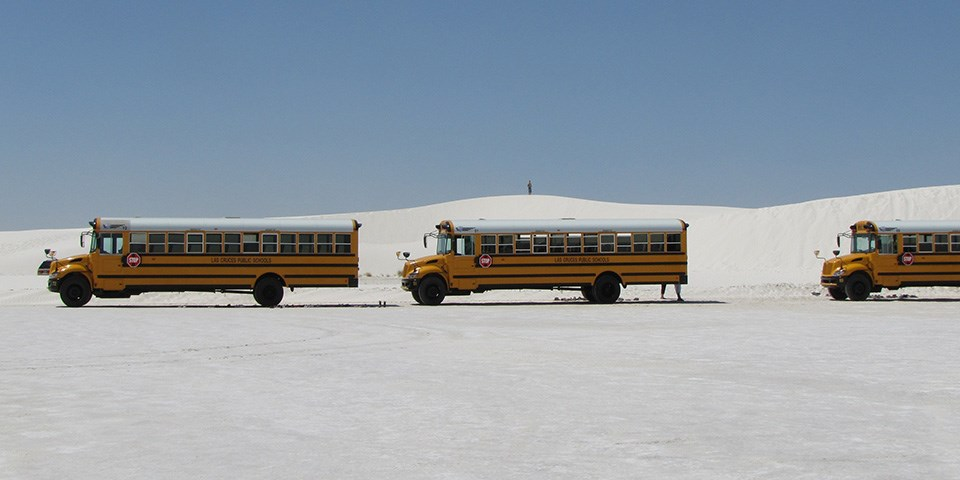 Three yellow school buses in parking area near a sand dune