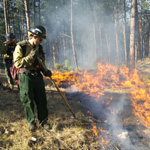 Fire fighters on prescribed burn in park