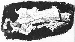 Drawing of a Wind Cave Cross-section Done by the 1959 Wind Cave Expedition