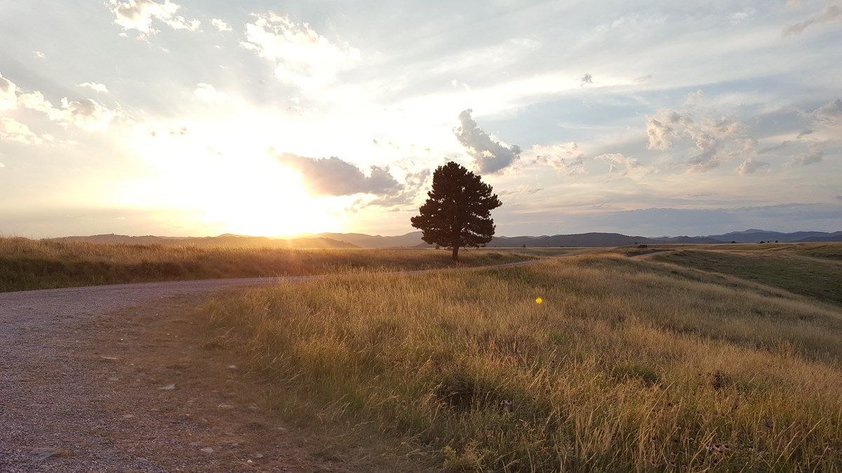 A single pine tree stands alongside a gravel road with sunset in the background