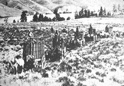Historic black and white photograph of bison being transported in carts across a field