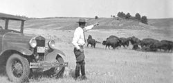 Ranger Estes Suter Observing the Bison Herd from his vehicle