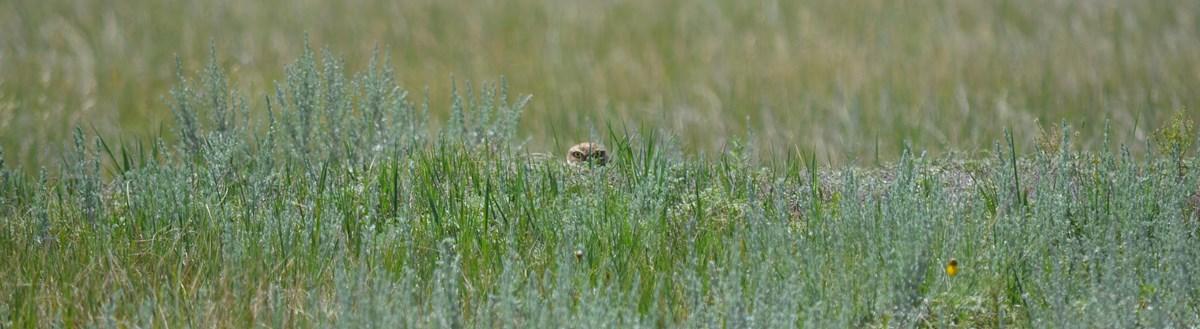 Crows Picking Over Prairie Burn On >> Birds Of Wind Cave Wind Cave National Park U S National Park