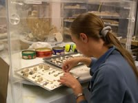 Catherine Burgess, Mammoth Site Intern, Working in Lab Piecing Together Teeth