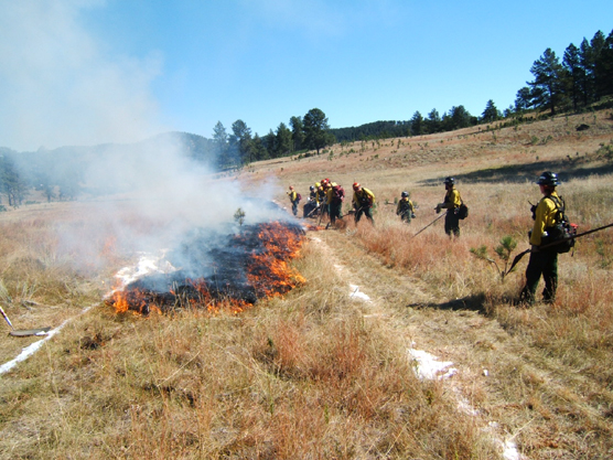 Crews prepare for a prescribed burn by creating a perimeter line around the burn area.