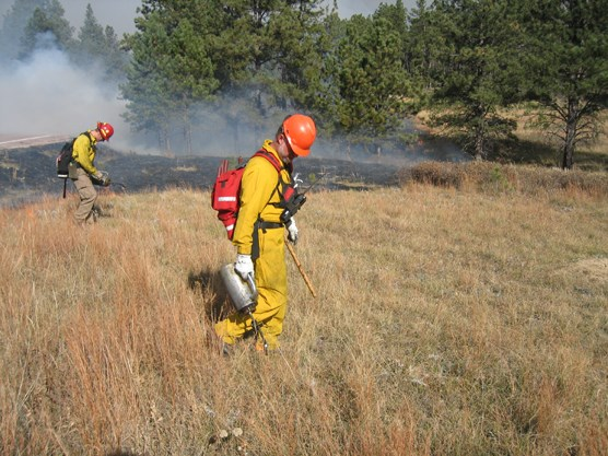 Two firefighters utilizing drip torches during prescribed burn operations