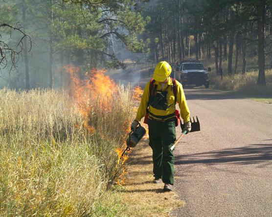 Man walking along road lighting a fire in the grass using a drip torch.