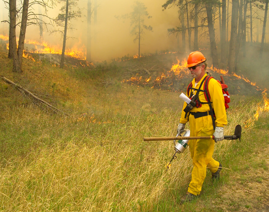 Firefighter walks through grass with a drip torch setting a prescribed fire.