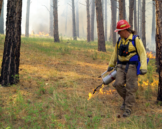 Assistant Fire Management Officer Steve Ipswitch igniting a burn in the Elk Mountain Campground last spring. The park plans to burn 93 acres adjacent to this area this fall.