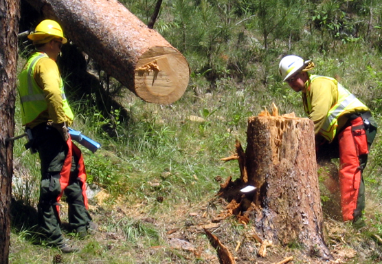Dave Kannas (left) serves as a spotter for Jason Devcich as he fells a tree in preparation for the American Elk Prescribed Fire.