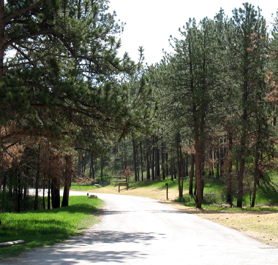 Elk Mountain Campground in Wind Cave National Park