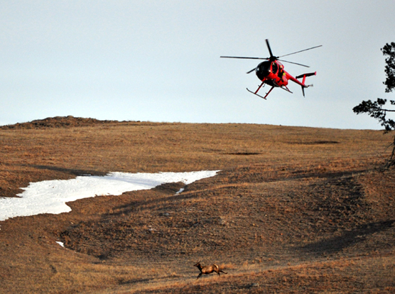 A helicopter flies over a hill while following an elk in the bottom of the picture.