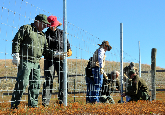 People working along a fence line.