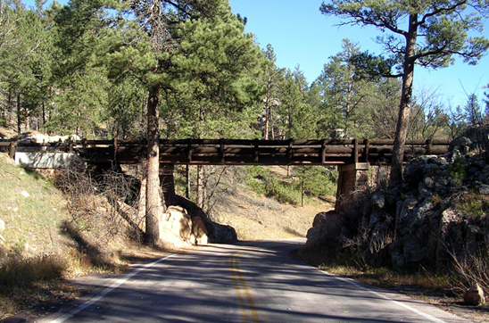 Road going underneath bridge among pine forest