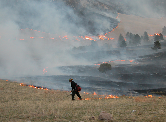 A firefighter using a drip torch to ignite a prescribed fire in Wind Cave National Park.