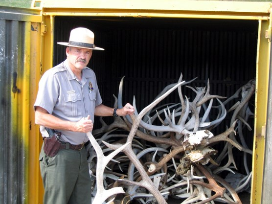 Chief Ranger Rick Mossman stands beside antlers seized as evidence over the last several years at Wind Cave National Park.