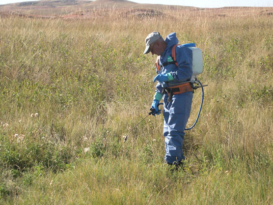 Park employee David Enyeart sprays herbicides on canada thistle in Wind Cave National Park.