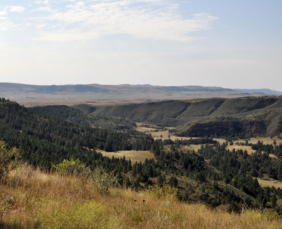 Landscape photograph of Casey property, featuring prairie and pine forest