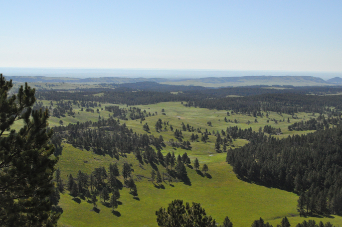 View looking down from Rankin Ridge. Green rolling hill and ponderosa pine dot the prairie landscape.