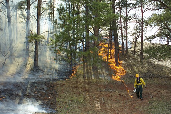 A firefighter uses a drip torch to ignite grasses in Wind Cave National Park during the Red Valley prescribed fire in 2004.
