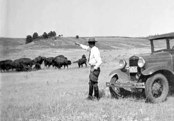 Estes Suter Observing Bison Herd