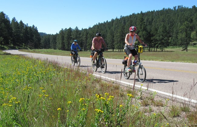 three people on bikes riding on a paved road through an open forest