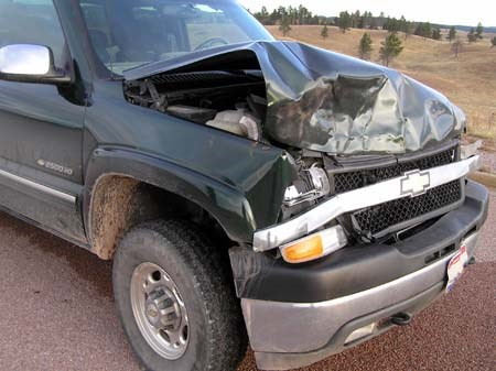 Motor vehicle accident involving a bison; the front of the vehicle is smashed