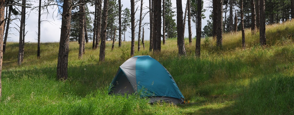 A tent set up in the grass and Ponderosa pine