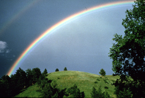 Rainbow over a grassy hill and trees.